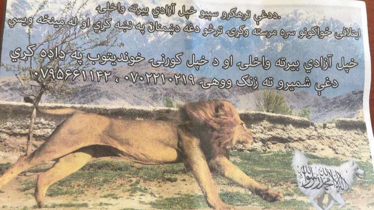 Dog Shehada..US Army Afghanistan